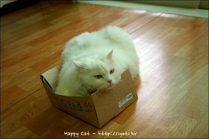 거대고양이 양군 박스