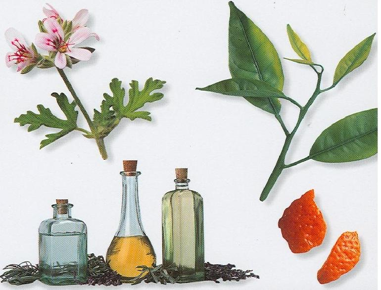 Extracting Natural Oils From Plants
