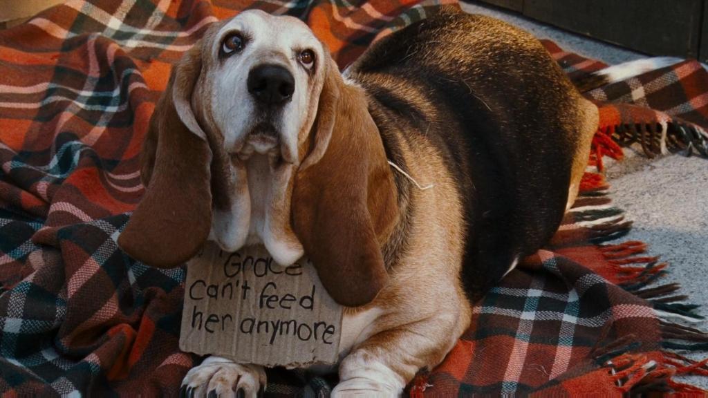 귀여운 강아지 와이드 배경화면