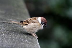 여리고 귀여운 작은 새