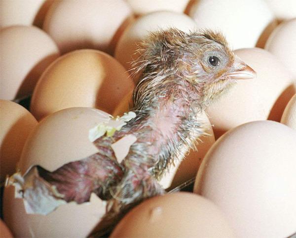 계란삶는법 계란찜만드는법 계란 계란요리 계란 삶는 시간 계란장조림 계란말이 만드는법 계란살충제 계란찜기 계란찜 계란국 계란보관법 계란후라이 칼로리 계란국 황금레시피 계란 유통기한
