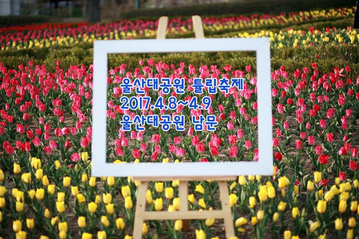 울산대공원 튤립축제, 봄 나들이 가기 좋은 곳!
