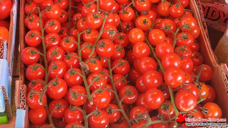 체리 토마토(Roma tomato)
