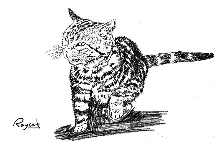고양이 5년 스케치
