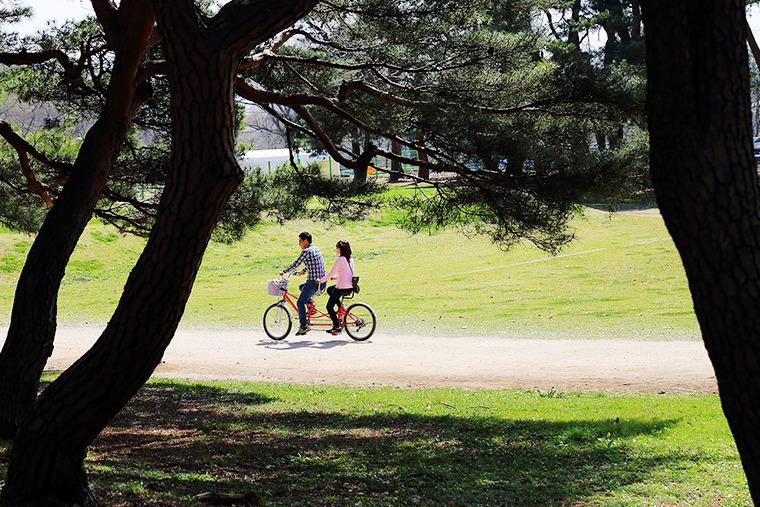 월성둘레길 경주 월성 둘레길 경주 자전거투어 도보여행코스 경주핫플레이스