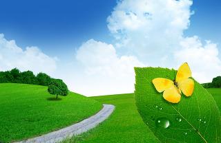 푸른 초원 노란 나비
