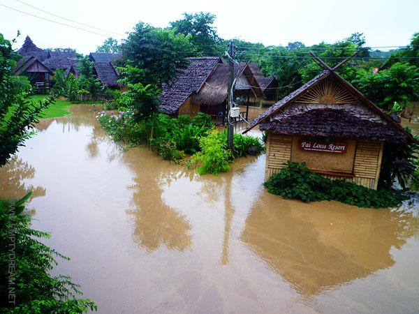 운이 좋으면 일 년에 딱 한 번 있는 홍수를 만날 수 있다