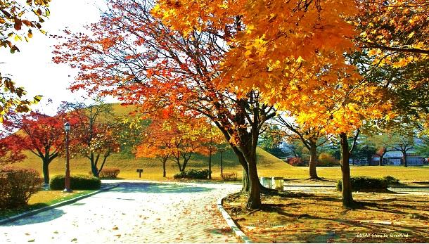 가을이 잠시 머물고 있습니다.