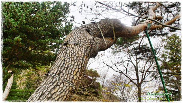 나무수술 - 나무치료