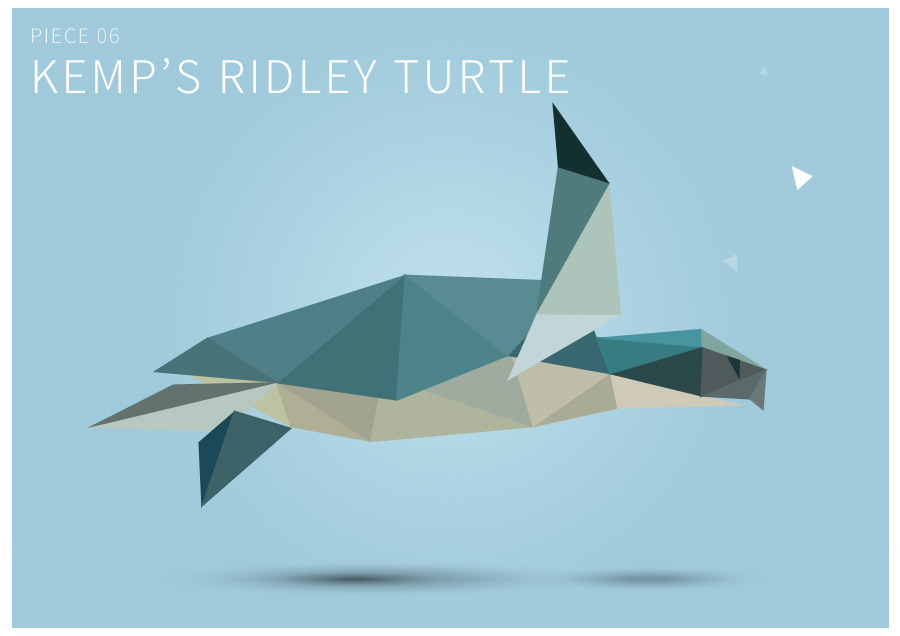Piece 06 Kemp's ridley turtle