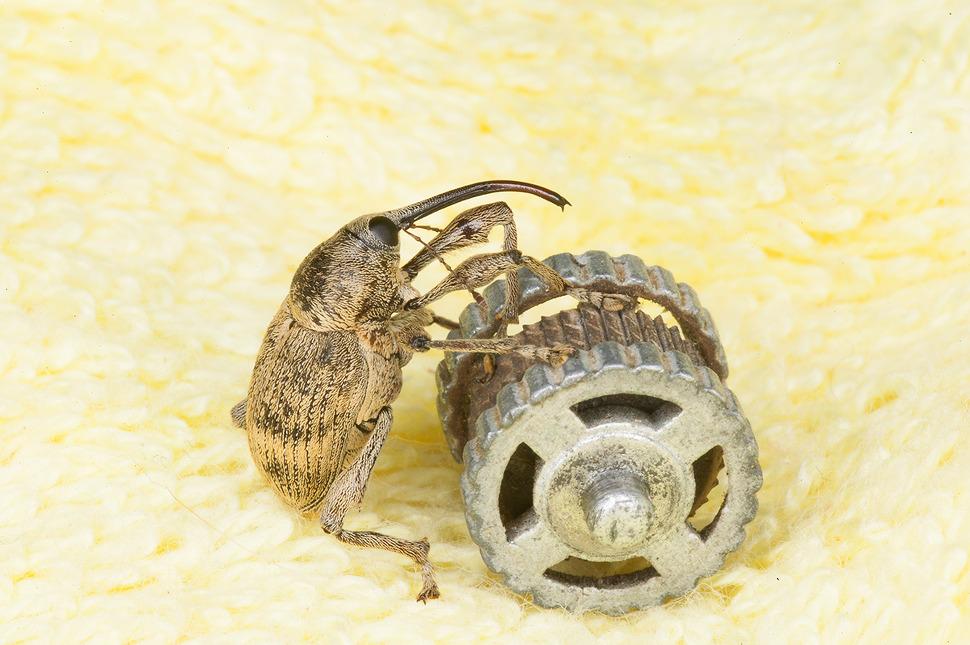 신기하게생긴 곤충 바구미