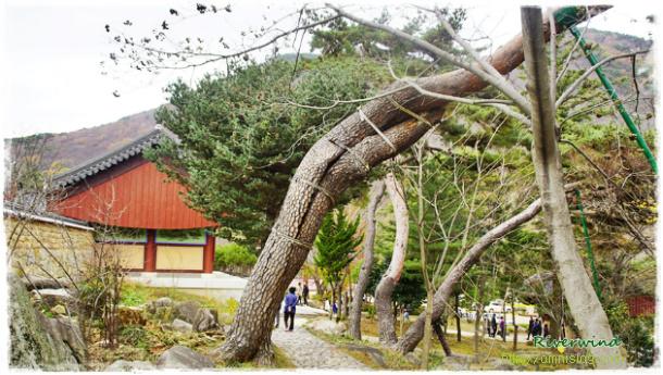 나무사랑, 나무수술 - 나무치료