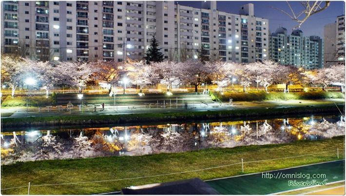 아름다운 밤 벚꽃 풍경