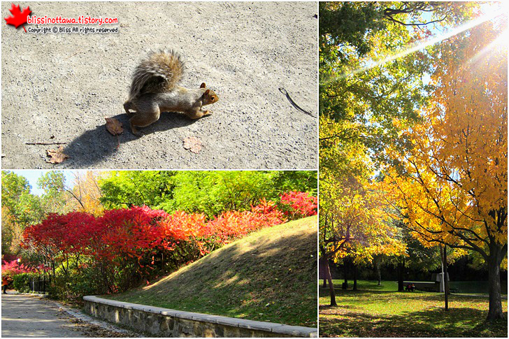 캐나다 동부여행 몬트리올 몽 로얄 공원