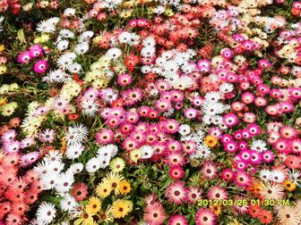 봄꽃-축제하는곳_봄-여행지