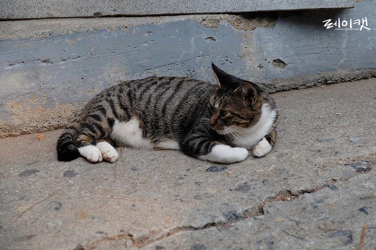 해동용궁사의 길고양이