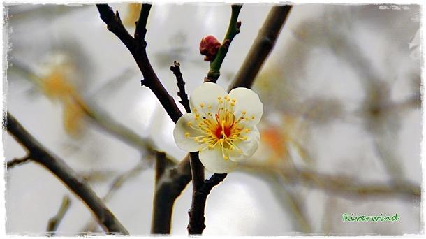 남도 부산의 봄소식