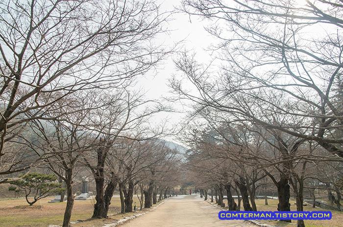 내소사 벚나무길