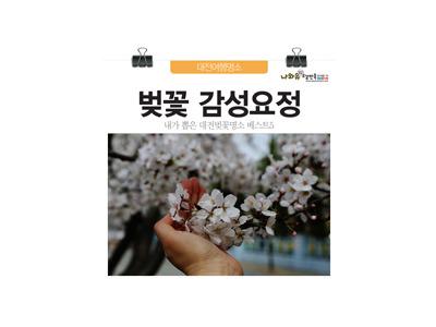 대전벚꽃명소 베스트5