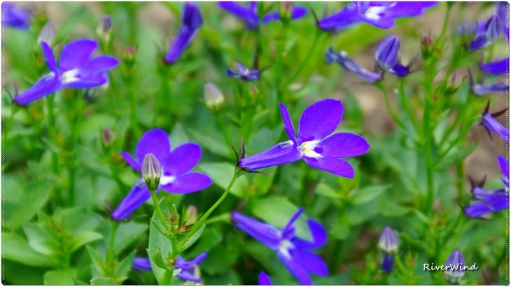 이름 모르는 자주색꽃.