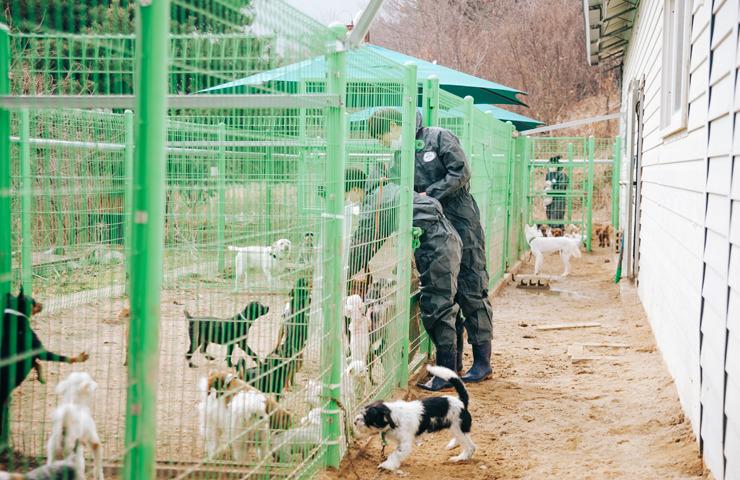 유기동물 봉사