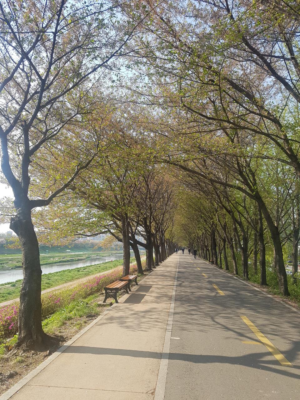 미세먼지 없는 날, 안양천벚나무길 산책