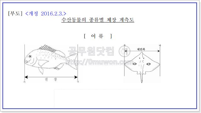 어류 체장 계측도