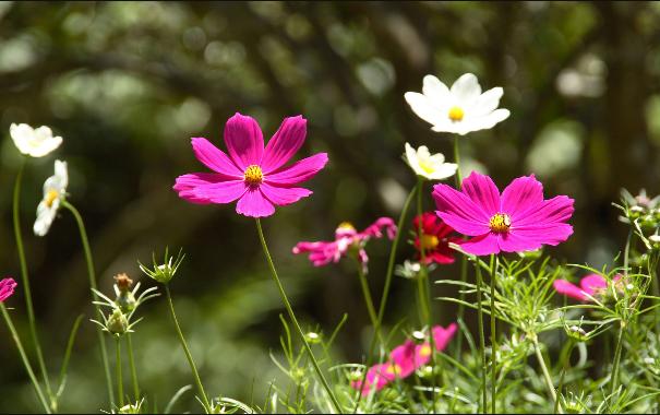꽃이 활짝 피는 시기