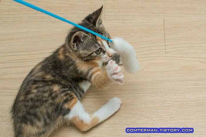 오뎅꼬치 고양이 장난감