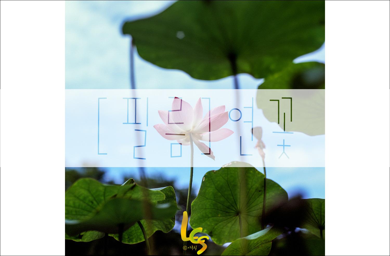[필름]연꽃