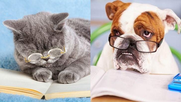 5분이면 알수있는 고양이 강아지 아이큐테스트 측정법