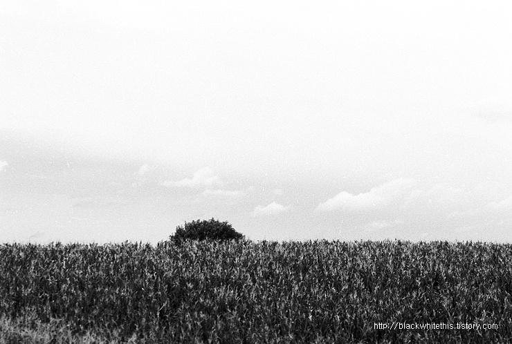 보리밭이 품은 한 그루의 나무