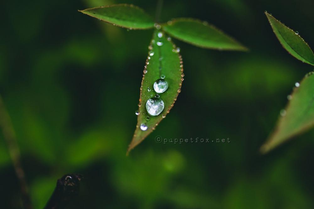 0516-빗방울-1