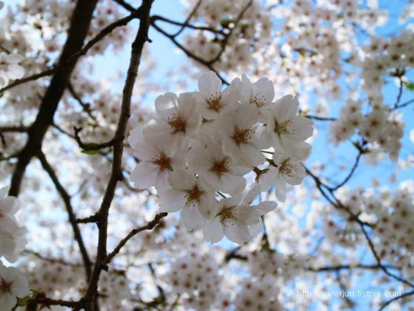 아름다운 봄꽃