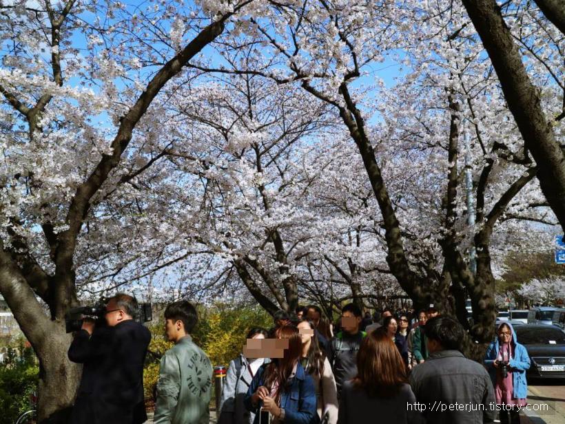 벚꽃 축제 구경나온 사람들