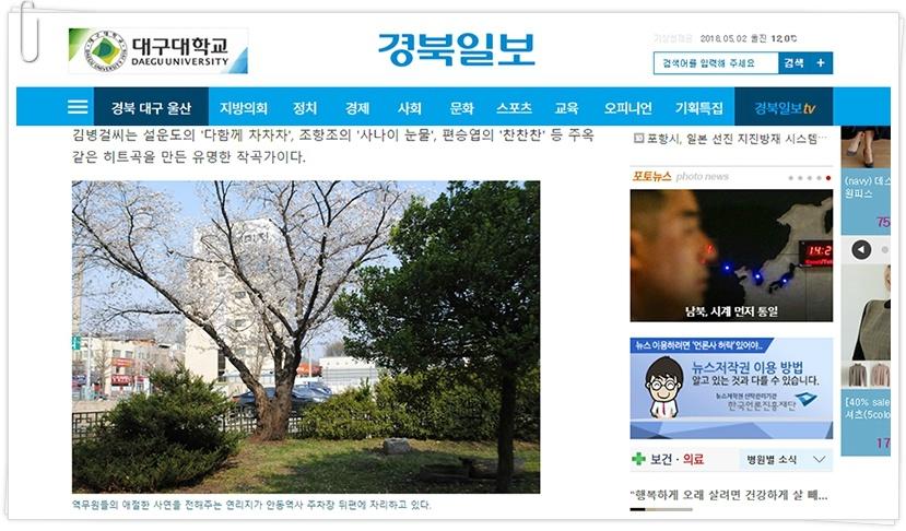사진: 연리지 사랑이야기를 간직한 안동역 벚나무.